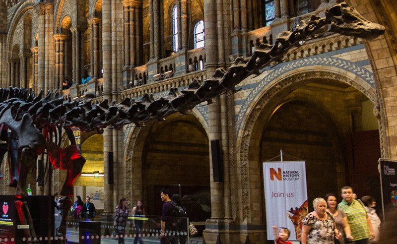 Something Fishy at the Natural History Museum?